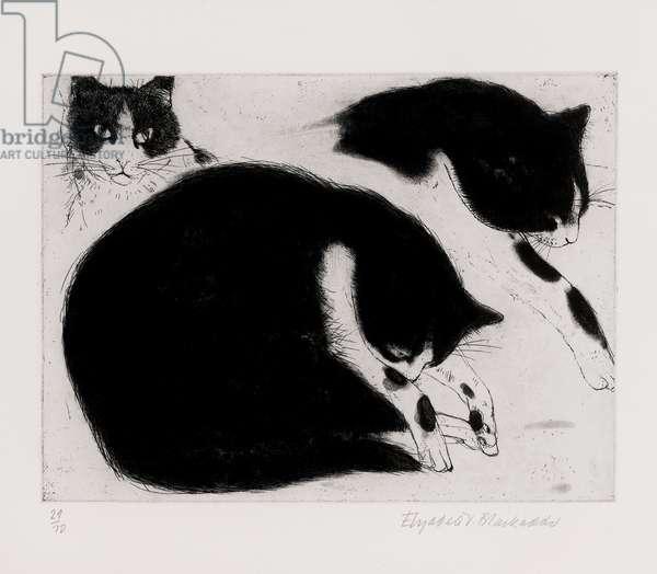 Three cat studies (etching & aquatint)