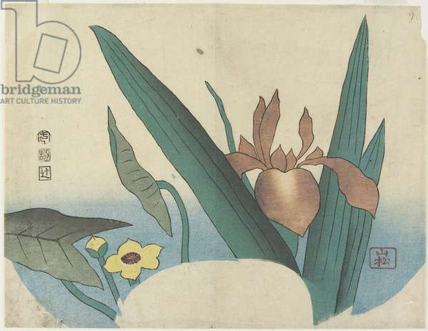 (Iris and Arrowhead), 1834 (colour woodblock print)
