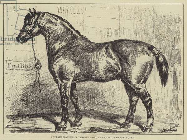 Captain Machell's Two-Year-Old Cart Colt