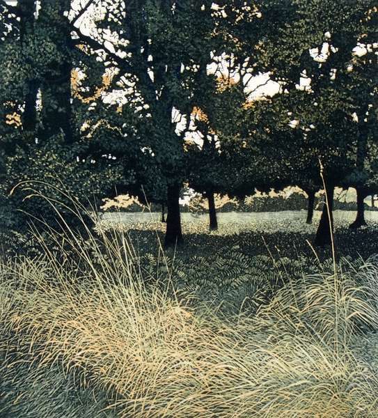 Woodshade, 1977 (etching and aquatint)