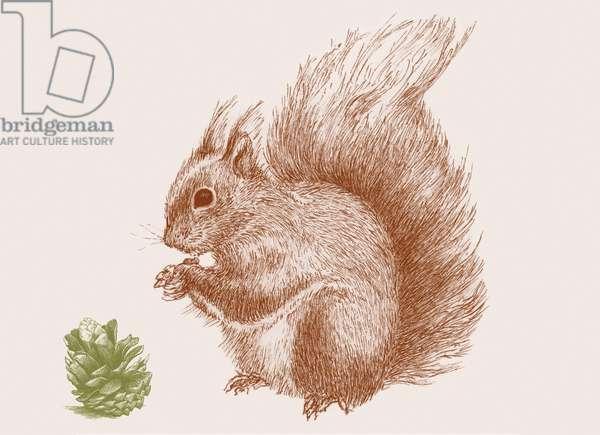 Squirrel, 2017, (digital)