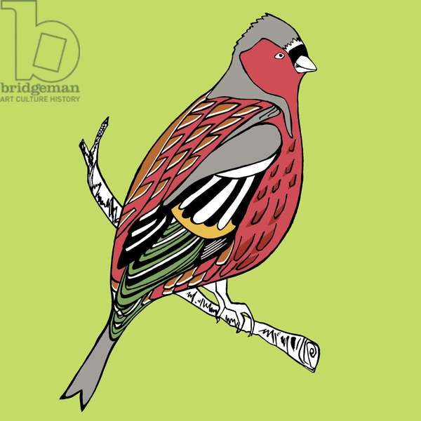 Charlie Chaffinch, pen and ink, digitally coloured