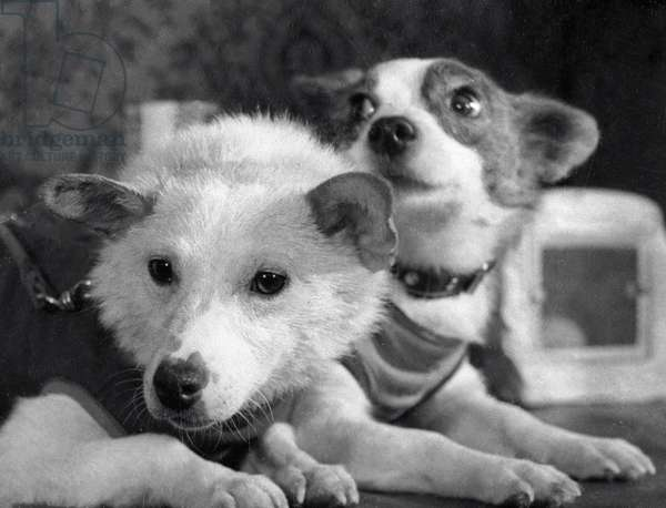 Dogs Belka (Squirrel) and Strelka (Little Arrow) after returning from space, 1960 (b/w photo)