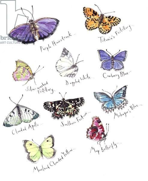 Extra Butterflies