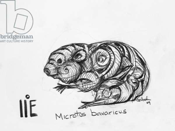 1E Bavarian Pine Vole, 2009, (graphite on paper)