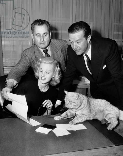 Rhubarb, le chat millionnaire: RHUBARB, from left, director Arthur Lubin, Jan Sterling, Ray Milland, and 'Orangey Murray,' who has just signed on to play Rhubarb the Cat, 1951