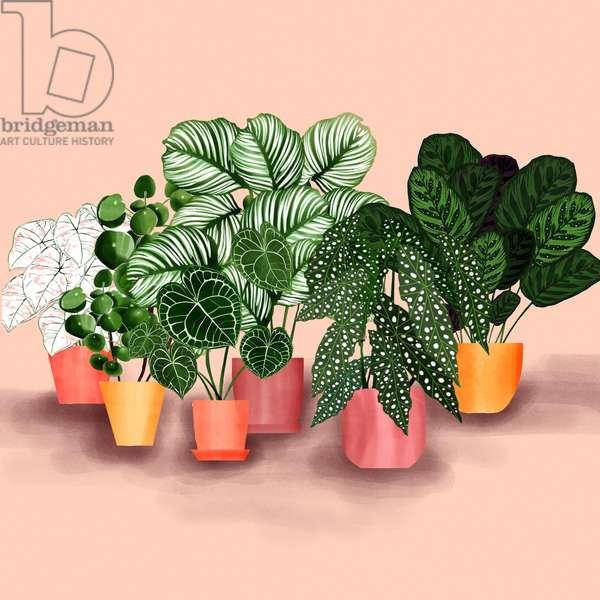 Plantgang, 2019, (digital illustration)