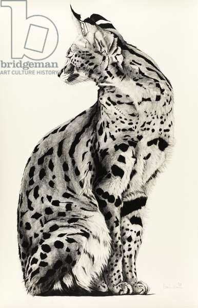 Twisted Serval, 2009, (Charcoal on paper)