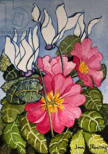 Cyclamen and Primrose, (watercolour)