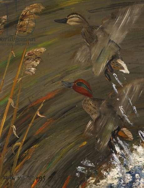 Widgeon Rising, 1945 (oil on canvas)