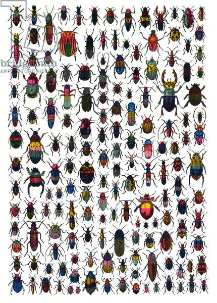 Beetles, 2007, (screen print)