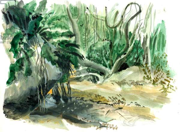 Tyrona, jungle