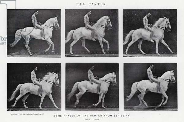 Eadweard Muybridge: The Canter (b/w photo)