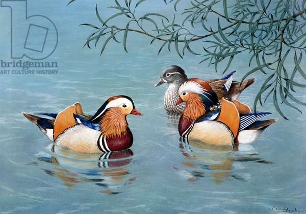 Three Mandarin Ducks