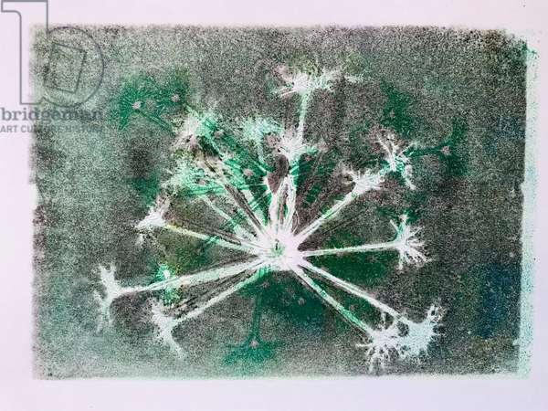 Seedhead I,2020,(monoprint)
