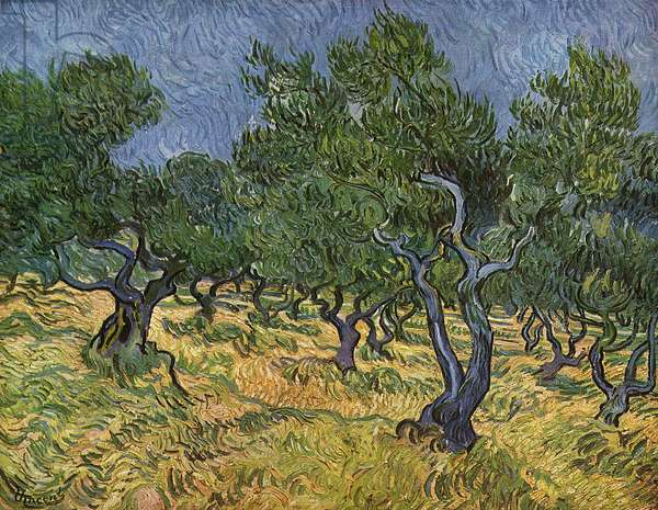 Olive Orchard mid-June, 1889 (oil on canvas)