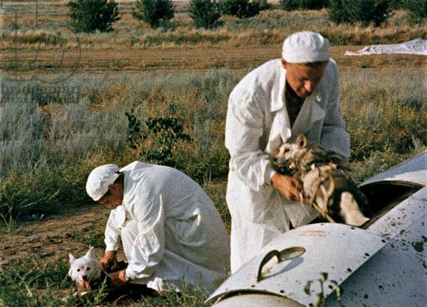 Doctors releasing test dogs from the spacecraft after its landing, 1960 (photo)