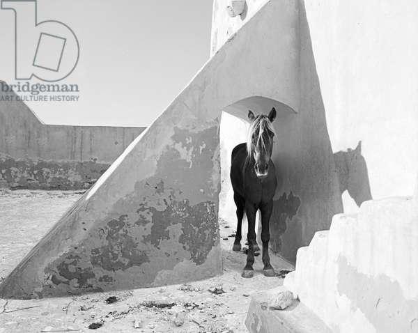 Pferd-Traum 7, 2015 (b/w photo)
