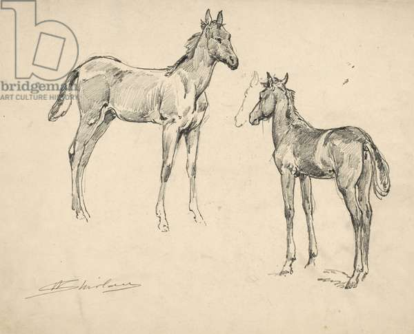 Study of two colts (pencil on paper)