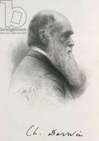 Portrait of Charles Darwin, 1879 (engraving)