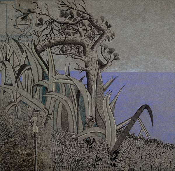 Botanical Gardens (Landscape with Scillonian Pine) 1945 (pen & ink and pencil on paper)