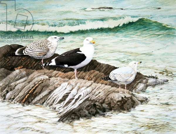 Winter gulls, Cornwall (w/c on paper)