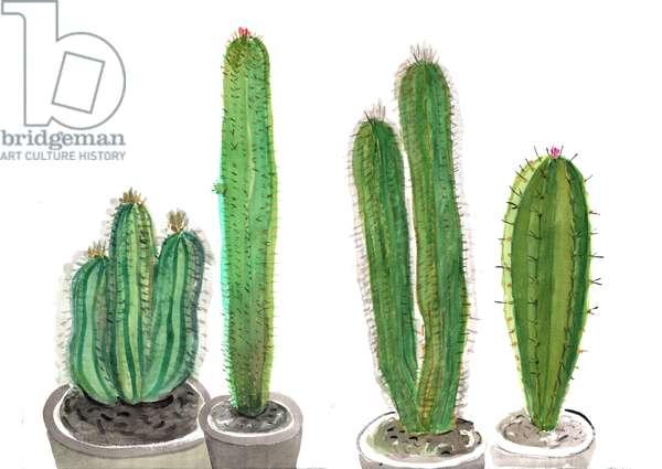 Cactus 1, 2012 (w/c on paper)