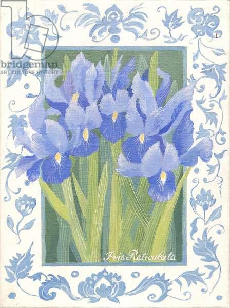 Blue Iris (acrylic)
