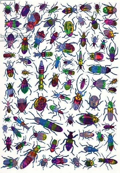 Beetles-random, 2008, (screen print)