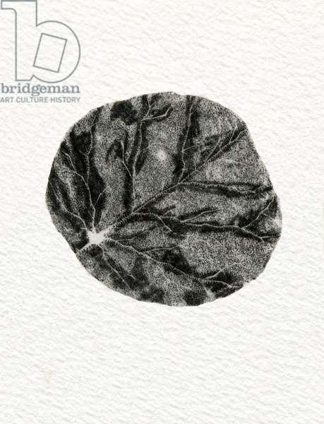 Leaf, 2014 (wood engraving on paper)