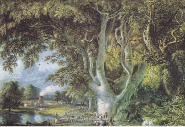 Oak Trees, Shoreham, Kent, Nature in Britain published by Collins, 1946 (litho)