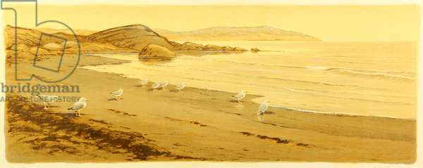 Seagulls on the Beach at the White Sea, 1955 (colour litho)
