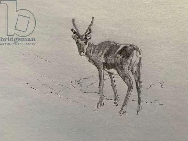 Reindeer, 2019, (pencil on paper)