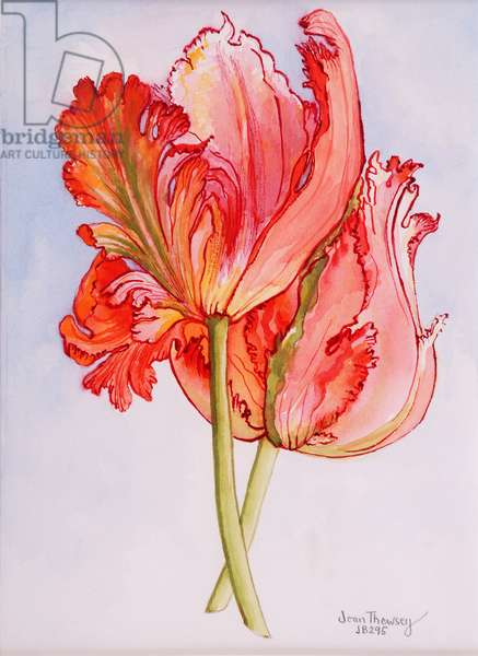 Two Frilled Tulips,2000,water colour on handmade paper