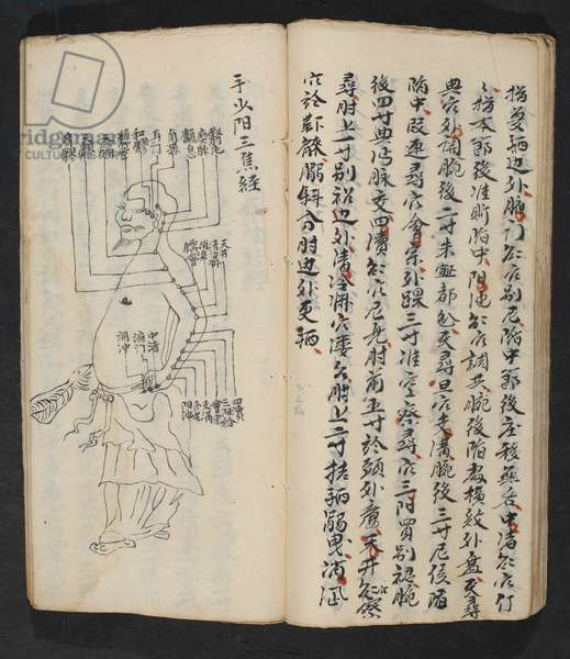 Acupuncture points on the arm, neck and base of the head, from Jing Guan Qi Zhi, 'The beginnings and ends of acupuncture points and channels', pub. Southern China, early 18th century (ink on paper)