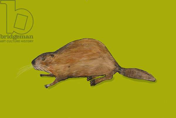 Beaver,2014,(acrylic)