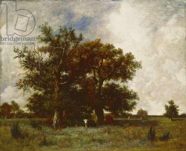 Fontainebleau Oak, c.1840 (oil on canvas)