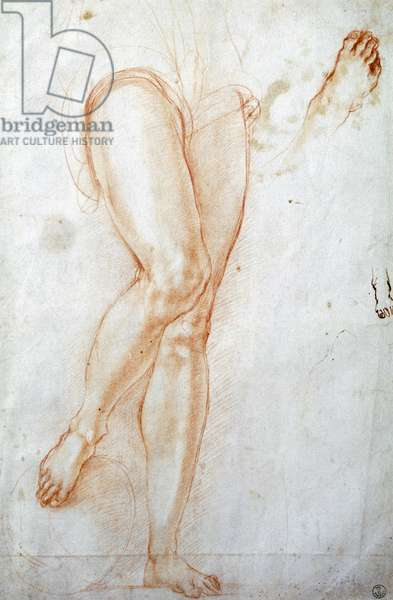 Study of legs, by Jacopo Carucci known as Pontormo (1494-1557), drawing.