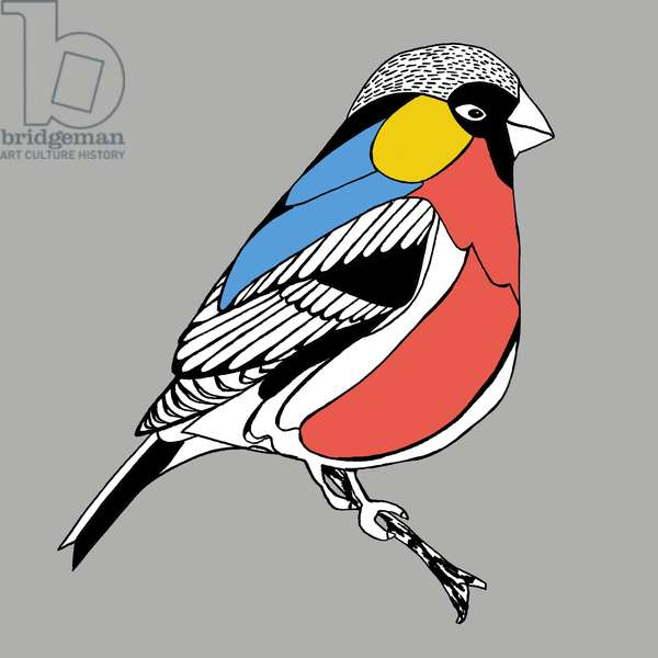 Benny Bullfinch, pen and ink, digitally coloured