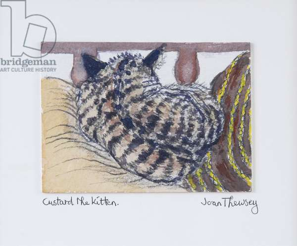 Custard the Kitten,2005,(pencil and water colour)