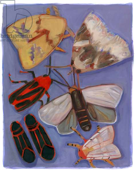 Minnesota Moths & Box Elders