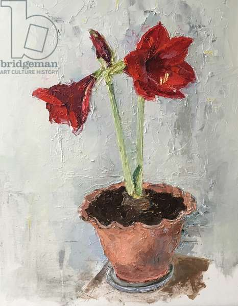 Red Amaryllis