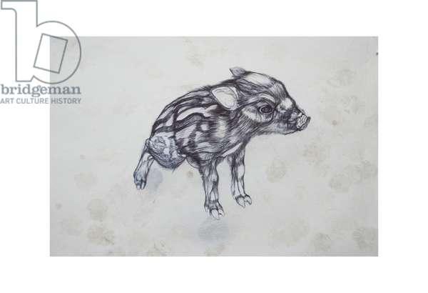 Little Pig,2015,(bic biro on paper)
