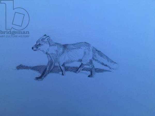 Fox, 2018, (pencil on paper)