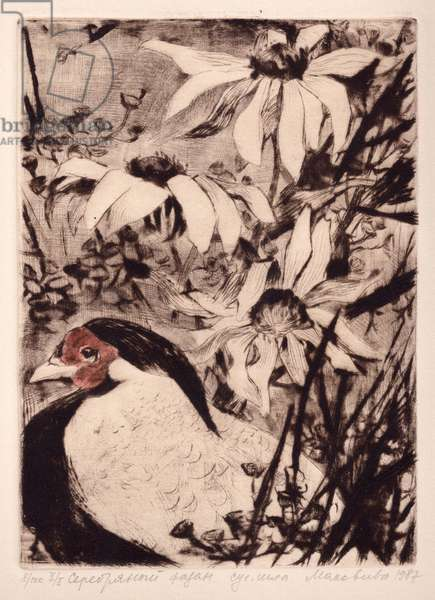 Golden Pheasant (Lophura nycthemera), 1989 (drypoint)