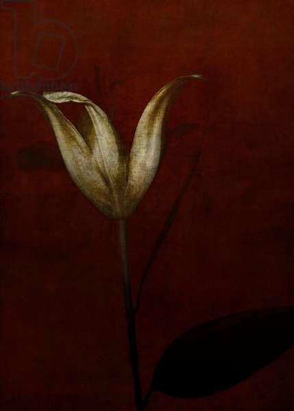 Lily, 2015 (digital photo art)