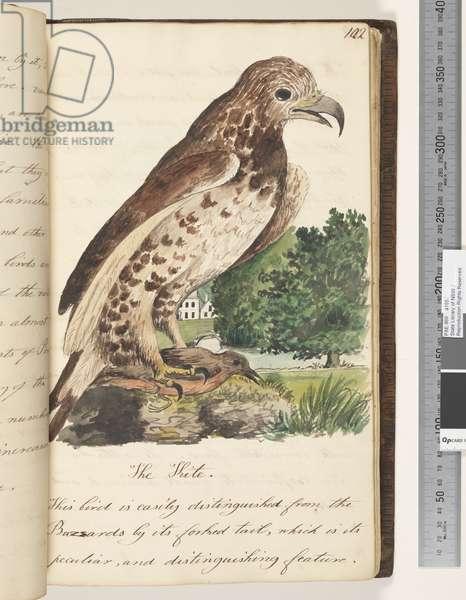 Page 102. The Kite, 1810-17 (w/c & manuscript text)