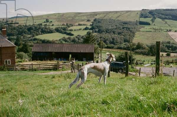 Eli, Montgomeryshire, Wales, 2010 (photo)