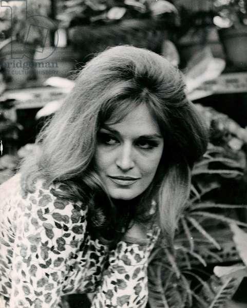 Portrait of Dalida, 1960-69 (b/w photo)