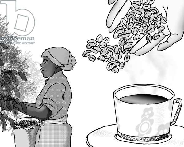 Coffee picker,2018,(Clipstudio)